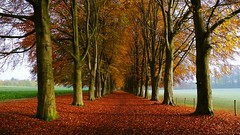 An Autumn Morning (Daphne-8) Tags: trees bäume bomen arbres arboles lane symmetry nature autumn herbst herfst automne landscape landschaft paysage paisaje leaves blätter bladeren foliage colours colors farben kleuren colores