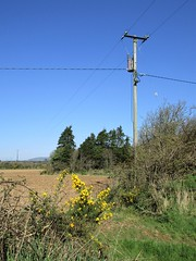 March Gorse (JulieK (enjoying Spring in Co. Wexford)) Tags: htt gorse march trees bluesky spring rural canonixus170 wexford ireland irish countryside field hedge telegraphpole telegraphtuesday wires flower