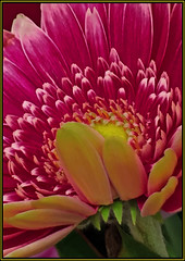 (Cliff Michaels) Tags: iphone6 iphone photoshop pse9 flowers kroger