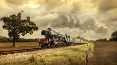 Flying Scotsman (brian_stoddart) Tags: railways steam trains countryside uk vin