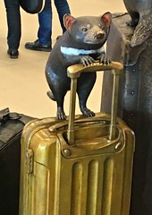 Only one airport in the world. (krillmerma) Tags: tasmania tasmanian devil australia airport hobart baggage bags luggage