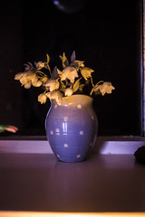 flowers at night (Loore-Ly) Tags: flowers vase spring blue spots plants plant nature indoor