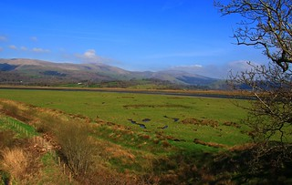 Ynys-hir RSPB Nature Reserve - Wales 240317 (1)