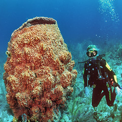 Big Ass  Barrel Sponge (jnhPhoto) Tags: belize2017 jnhphoto scuba scubadiving ocean coral corals barrelsponge big