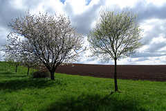 trees in the morning (Herr Nergal) Tags: nature tree sky clouds green meadows flower hx400v sony saarland rappweiler deutschland sonne frühling wiese natur landschaft landscape himmel baum bäume
