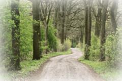 In my dreams (Magreen2) Tags: path trees orton soft green spring mood dreamy dream magic mystic traumverträumt weichbäume weg pfad