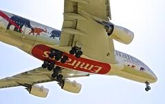 BCN/LEBL: Emirates Airbus A380-861 A6-EDG MSN023 (Roland C.) Tags: unitedforwildwilfeorg emirates airbus a380 a388 a380861 a6edg bcn lebl elprat barcelona airport spain