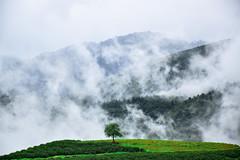 20140904-DSC_0254 (ColourFactory) Tags: travel mountains tree green nature landscape vietnam sapa