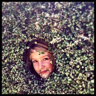 365/308 • hedging her bets • #2014_ig_307 #6yo #heronswood #morningtonpeninsula #dromana