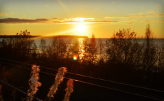 Sunset Over Cook Inlet (Luv Duck - Thanks for 15M Views!) Tags: anchorage goldensunset fireweed cookinlet alaskansunset pointworonzof alaskainoctober