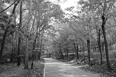 Death and white. (notfakemaris) Tags: park trees bw white lake black tree contrast tn tennessee parks radnor