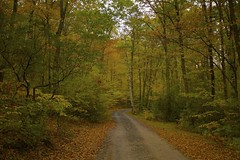"""""""Do not go where the path may lead, go instead where there is no path and leave a trail"""" - Ralph Waldo Emerson (New NewEnglander) Tags: autumn fall colors ct foliage"""