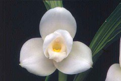 """Flower example - Right profile example 1 • <a style=""""font-size:0.8em;"""" href=""""http://www.flickr.com/photos/128564434@N02/15346916929/"""" target=""""_blank"""">View on Flickr</a>"""