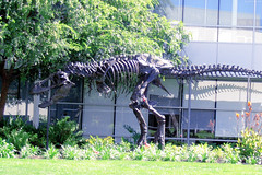 "T-Rex skeleton on Google Campus (side) • <a style=""font-size:0.8em;"" href=""http://www.flickr.com/photos/34843984@N07/15360178987/"" target=""_blank"">View on Flickr</a>"
