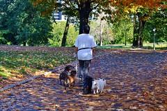 Central Park-North Meadow, 10.04.14 (gigi_nyc) Tags: nyc newyorkcity autumn centralpark autumnleaves autumncolors fallfoliage northmeadow