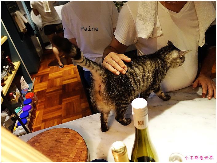 台北 屋頂上的貓食堂 (6).JPG
