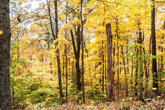 IU Oxfam Ecotour - Tecumseh Trail - October 18, 2014