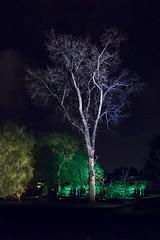 Un soir d'octobre (monilague) Tags: autumn light tree fall water colors automne garden de evening pond eau montral lumire montreal couleurs jardin soir botanique arbre tang