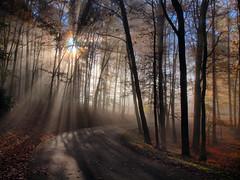 God Rays (Bill Fultz) Tags: autumn fall fog fallcolors westvirginia grandview nationalparkservice godrays newrivergorge almostheaven newrivergorgenationalriver westvirginiasunrise