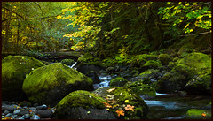 Autumn Stream (docoverachiever) Tags: autumn nature water leaves oregon forest landscape moss scenery rocks stream nationalforest cascades forestimages challengeyouwinner challengeclubchampion frenchpetecreektrail fir:forest=willamette