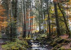 DSC_4874 Black Forest 2014 (108) (Liane Mai) Tags: nikon wasser foto kunst urlaub natur steine bach land bild sonne wald schwarzwald blackforest baum wandern farben ruhe str