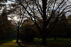 Sunset Luisenpark Mannheim (christiane.grosskopf) Tags: autumn trees sunset backlight germany deutschland sonnenuntergang herbst lawn wiese bume mannheim gegenlicht luisenpark herbststimmung autumnalatmosphere nikond7000