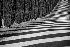 Lights and shadows in black & white (hjuengst) Tags: italien light shadow blackandwhite italy lines licht italia stripes tuscany cypress schatten streifen toskana linien schwarzweis zypressen valdorcia sanquiricodorcia nikond7000