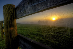 World Wide Web (It's my whole damn raison d'etre) Tags: county morning blue orange green alex field yellow sunrise fence dawn golden virginia spider nikon farm web magic spiderweb foggy va hour hdr loudoun purcellville erkiletian d800e