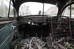 VW Export 1952 (307) (belowodje) Tags: vw volkswagen beetle rusty junkyard kfer kaufdorf messerli
