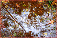 November Abstraction (ScottElliottSmithson) Tags: november autumn trees sky abstract color reflection fall leaves canon puddle eos washington leaf woods king 7d abstraction washingtonstate mudpuddle issaquah kingcounty cougarmountain antiaircraftpeak eos7d dtwpuck scottsmithson scottelliottsmithson