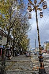 บรรยากาศยามฤดูใบไม้ร่วงริมถนนเมืองหลี่ถัง