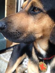Life is good :) (nevenbozic) Tags: dog friend best lucky neven bozic