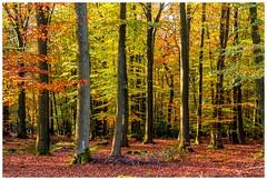600D-5958-Auto (ac | photo) Tags: autumn trees light fall nature colors leaves landscape fallcolors