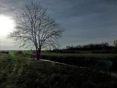 L'arbre orageux (domiloui) Tags: france nature flickr ciel arbres lumiere paysage lorraine campagne couleur ambiance nuances cooliris abaucourt blinkagain