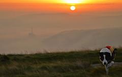 My little humbug (lisheeny) Tags: morning sun mist collie district derbyshire border peak tor rise mam