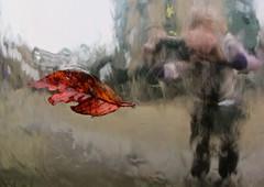 Fuzzy me making a leaf levitate. (wonky knee) Tags: reflections fuzzy sheffield levitation autumnleaf