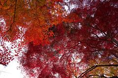 Eboshiyama Park 4