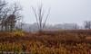 _MG_0893 (sbogden) Tags: nature treesinfog fallmorning foggyfallmorning treesinfall foggyscenery foggyfallscenery