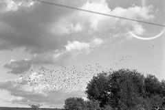 Tottenham (sizifo) Tags: leica blackandwhite bw london birds iso400 35mmfilm m6 tottenham xtol 50mmlens leicam summicronm tmaxfilm xtoldeveloper