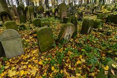 (Jacek P.) Tags: fall cemetery poland jewish kraków kazimierz jesień cmentarz kirkut krakoff żydowski