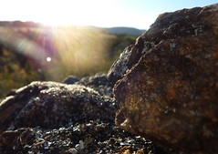 Rock at Pine Island (LachlanMacPhotography) Tags: pine island rock dof sun sunbeam moss lichen canberra act australia flare macro