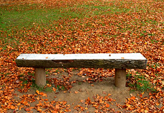 Empty bench (Tony Worrall) Tags: england northern uk update place location north visit area county attraction open stream tour country welovethenorth northwest empty bench seat autumn leaves season seasonal bare outside sat outdoors natural nature brown colours colourful