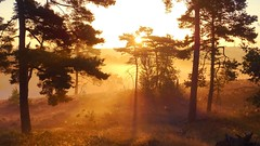 Golden Morning (Daphne-8) Tags: sun salidadelsol leverdusoleil sonnenaufgang sunrise morning mañana morgen zonsopkomst light licht luz luce lumière beams rays strahlen stralen rayons mist nebel fog nuvola nevel dünst gold