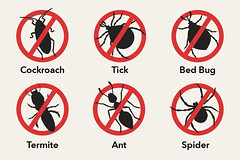 No insects logo - generic - cockroach, tick, bed bug, termite, ant, spider (insightpest) Tags: spider tick ant termite roach bed bug sign pest control illustration
