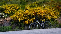 Out of the road (panoskaralis) Tags: bikes bike cycling flower flowers yellow green nature mountain mountainside mountains fitness fit road outdoor landscape spring morning aegean aegeansea island lesbian lesbos lesvosisland lesvos mytilene greece greek hellas hellenic