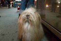 ifc center, greenwich village (Charley Lhasa) Tags: ricohgrii grii 183mm 28mm35mmequivalent iso5000 ¹⁄₈₀secatf28 0ev aperturepriority pattern noflash r013380 dng uncropped taken170310185032 uploaded170409235003 3stars flagged adobelightroomcc20159 lightroomcc20159 adobelightroom lightroom charley charleylhasa lhasaapso dog night movietheater ifccenter personalshopper greenwichvillage manhattan newyorkcity nyc newyork ny tumblr170409 httpstmblrcozpjiby2ktausp
