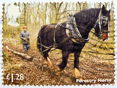 great stamp Great Britain £ 1.28 Forestry Horse (Holzrückpferd) timbre UK United Kingdom stamps England selo sello stamps Great Britain England UK แสตมป์ บริเตนใหญ่ pulları İngiltere frimärken Storbritannien टिकटों ग्रेट ब्रिटेन इंग्लैंड timbre (stampolina, thx ! :)) Tags: markica antspaudai маркица pulları tem perangko timbru england gb greatbritain unitedkingdom uk commonwealth grosbritannien british briefmarken スタンプ postzegel zegel zegels марки टिकटों แสตมป์ znaczki 우표 frimærker frimärken frimerker 邮票 طوابع bollo francobollo francobolli bolli postes timbres sello sellos selo selos razítka γραμματόσημα forestryhorse horse pferd rückpferd cheval うま paard koń άλογο cavallo 马 caballo коњ лошадь konj kôň cavalo hest häst حصان סוּס zirgs