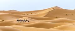 Nomads (GC - Photography) Tags: nomadas nomads arena sand desierto desert dunas dunes merzouga marruecos maroc morocco sahara saharadesert camello camel gcphotography berber berebere
