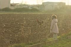 Rooster (sonia.sanre) Tags: pueblo naturaleza nature sun light curiosidad curiosity kids niña girl atardecer sunset animals gallo rooster