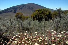 Piton de la fournaise (capsul'in) Tags: volcan extérieur nature paysage pitondelafournaise iledelaréunion